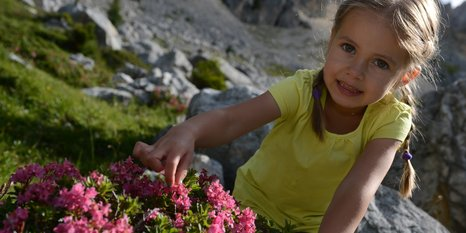 Bambina e rose alpine sotto il Latemar