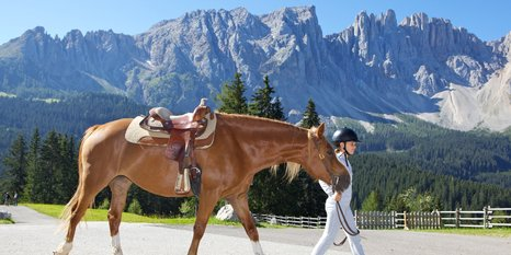 Discover the world of horses under the Latemar
