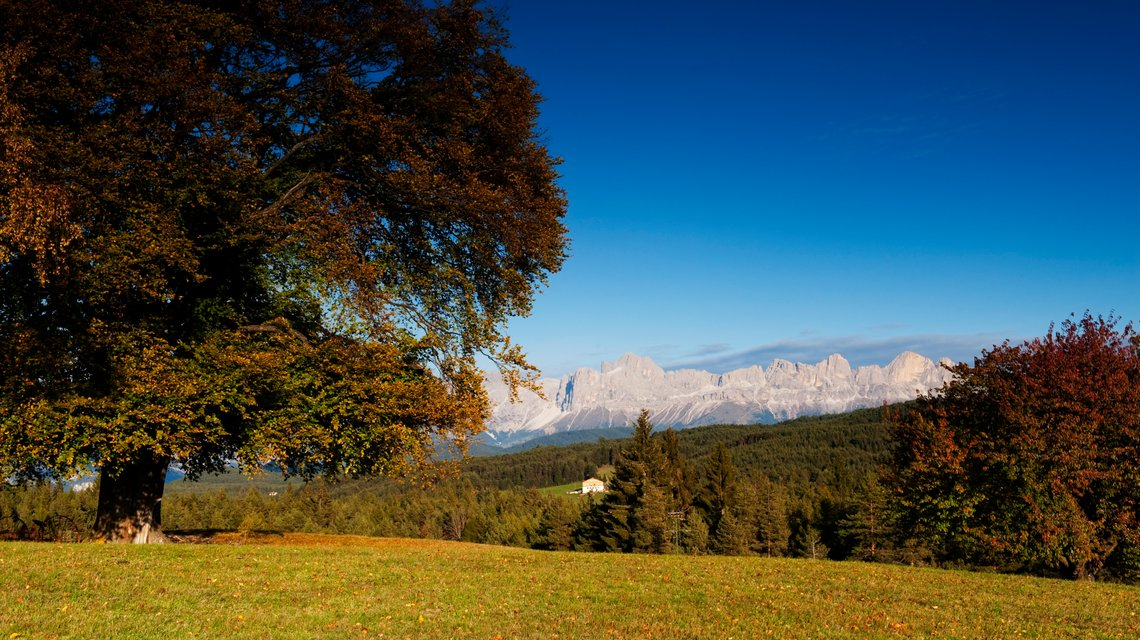 Autumn in Nova Ponente with view on the Rosengarten/Catinaccio